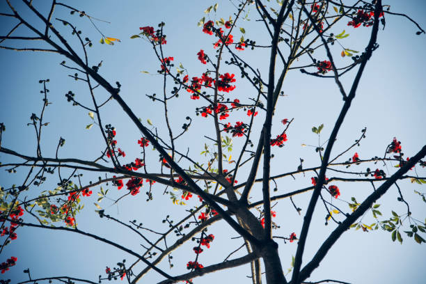 Red flowers with green leaves of a tree stock photo