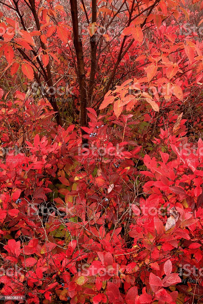 red foliage royalty-free stock photo