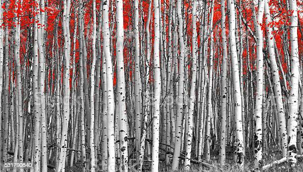 Photo of Red Forest Black and White Landscape