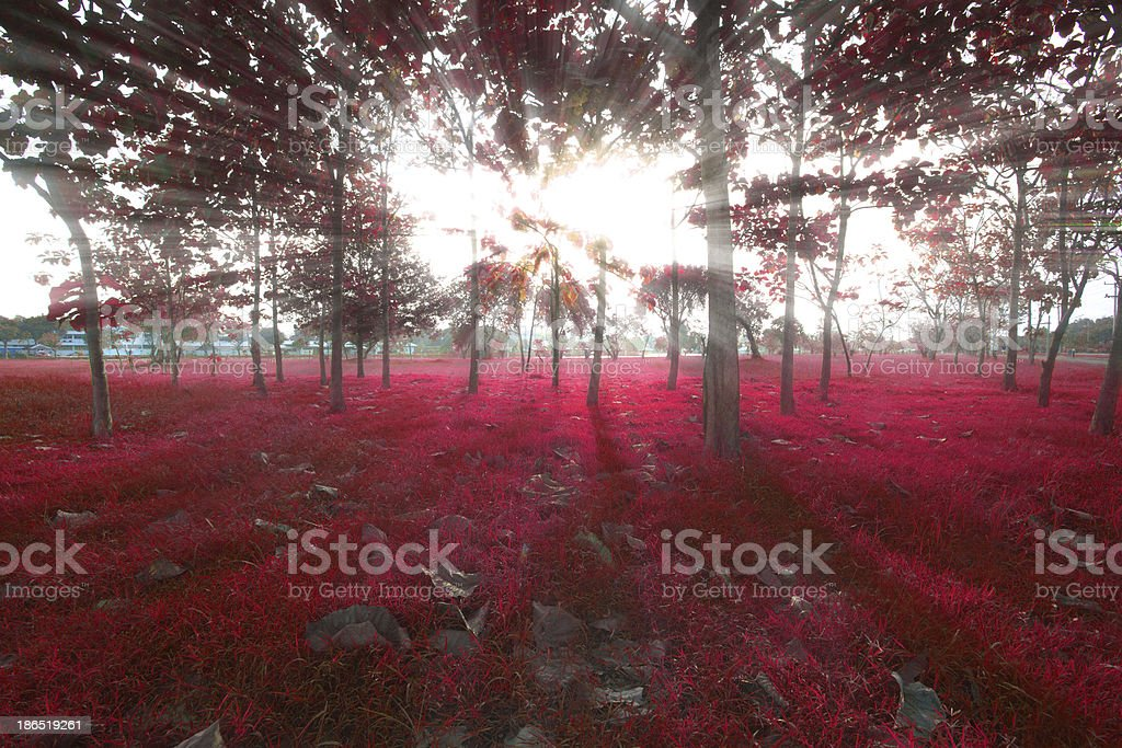 red forest. royalty-free stock photo