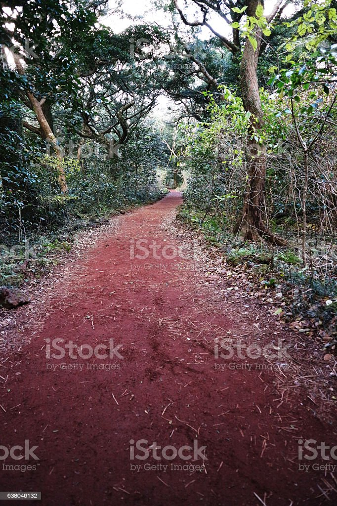 Red Forest stock photo