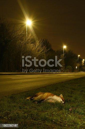 istock Red Fox Road Kill 1302292187