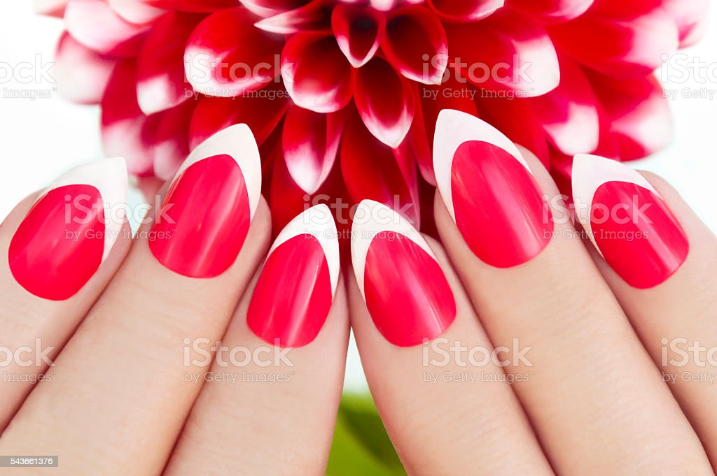 Red French manicure . stock photo