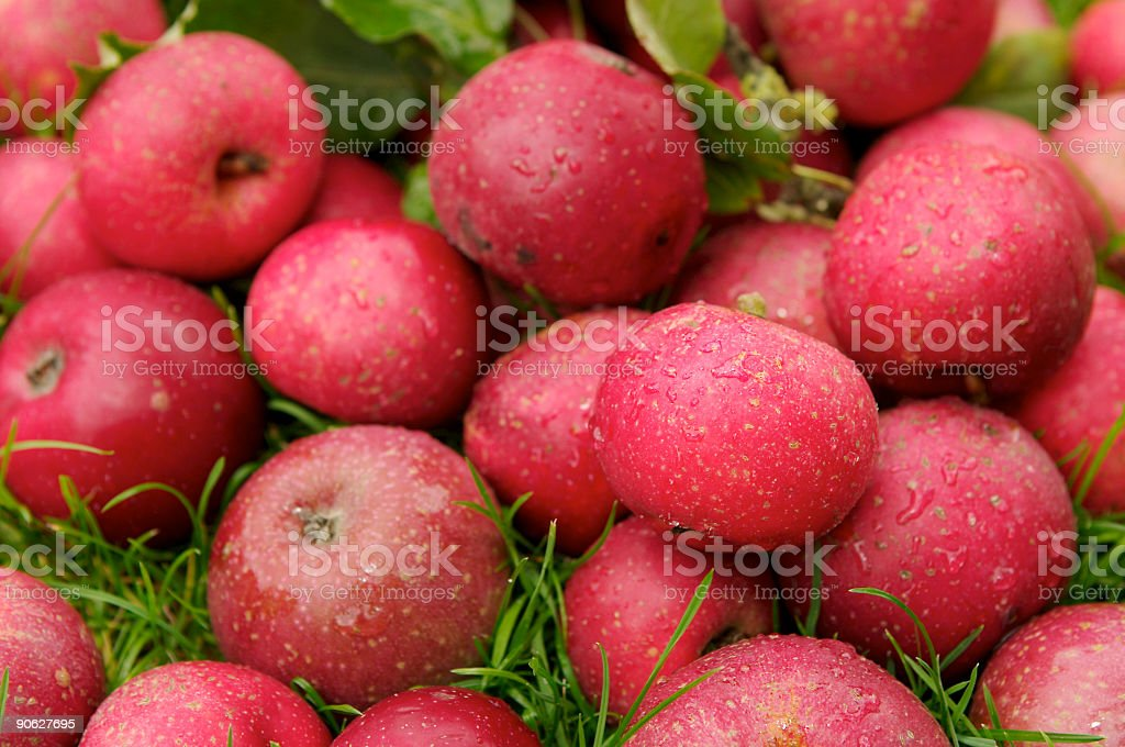 Red Fresh Apple's stock photo