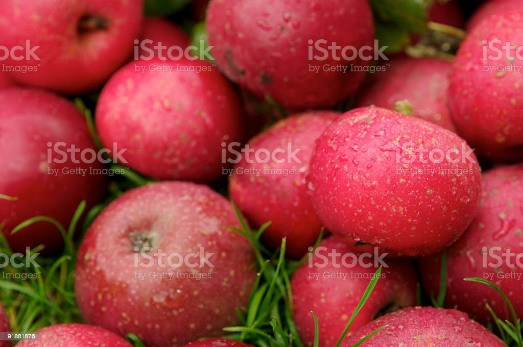 Red Fresh Apples stock photo