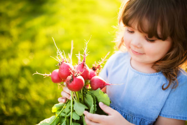 Red fresh radish in hands of adorable little girl. Healthy food for children concept stock photo