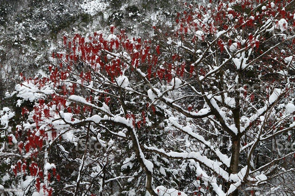 赤いフルーツ ロイヤリティフリーストックフォト