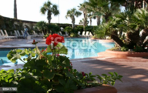 Red geranium beside a lovely swimming pool on a tropical island.