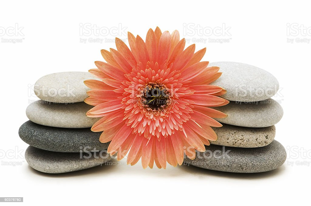 Red gerber daisy and pebbles isolated on white royalty-free stock photo