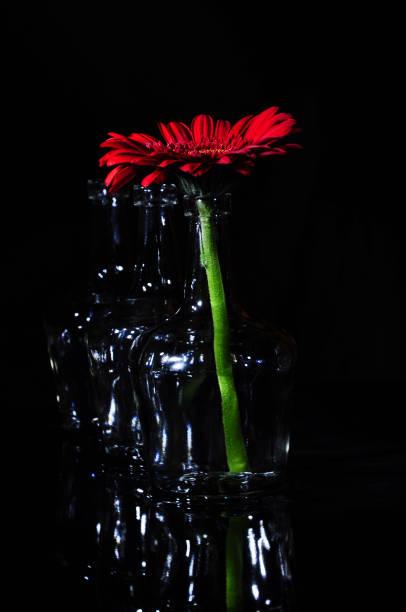 Red gerbera daisy in vase stock photo
