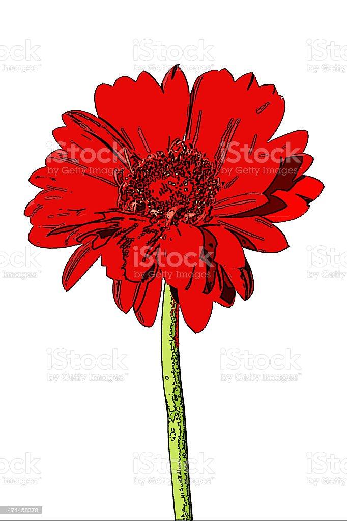 red gerbera, Gerbera hybrida, posterized stock photo