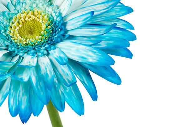 Red gerbera spring time flower beauty in nature picture id171152879?b=1&k=6&m=171152879&s=612x612&w=0&h=9kxor807oqf36e9hxngaibwznzjw qlhoq9hxsxjpb0=