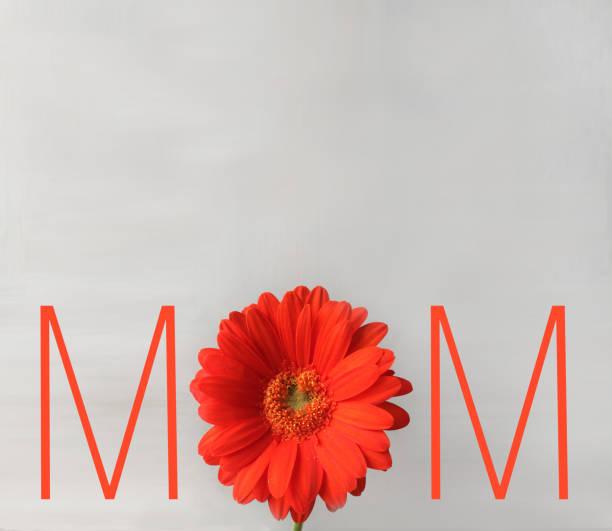 Red Gervera Daisy und Mutter-Tageskarte – Foto