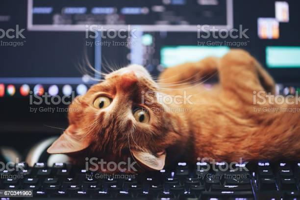 Red ginger cat on computer keyboard picture id670341960?b=1&k=6&m=670341960&s=612x612&h=yu9o12fgf80send0fk75b7qajcynppit4osiqvcfkis=