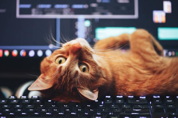 Red ginger cat on computer keyboard picture id670341960?b=1&k=6&m=670341960&s=612x612&w=0&h=bibvsg62fc9caq4bvyvxvrjhumeh9if7svlu1z w4em=