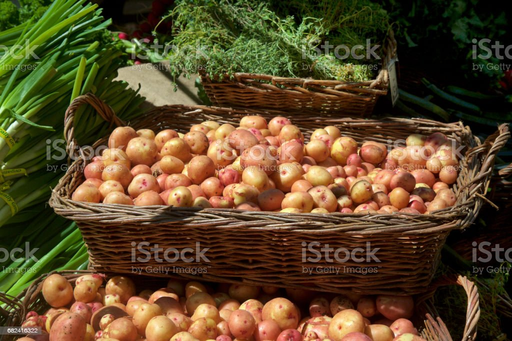 Red gold new potatoes at the farmer's market royalty-free stock photo