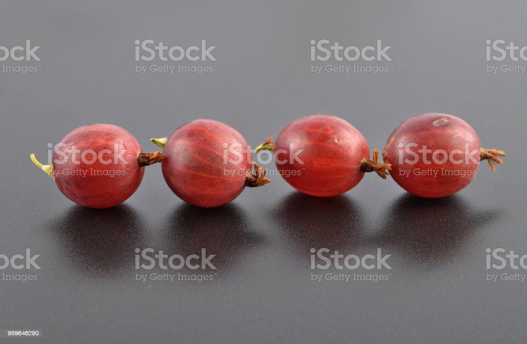Rojo grosella negro - Foto de stock de Alemania libre de derechos