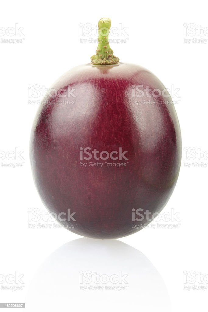 Red grape berry stock photo