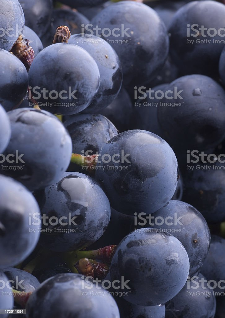 Red grapes, freshly harvested royalty-free stock photo