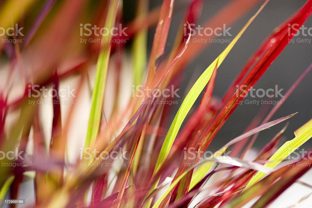 Red grass stock photo