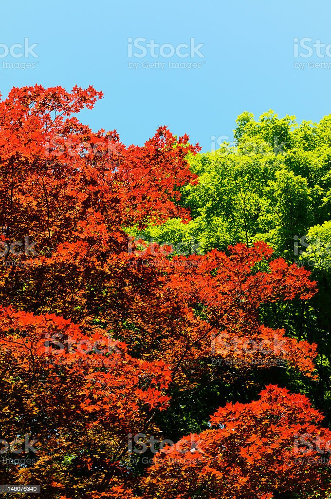 Red, green and blue royalty-free stock photo