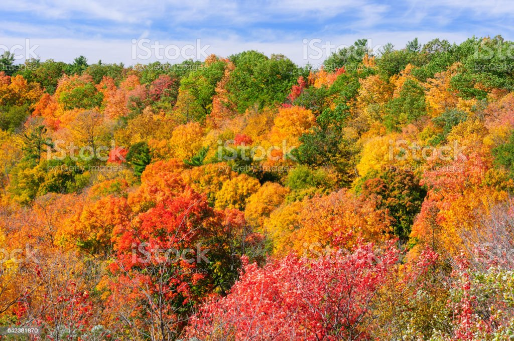 Red, green and yellow maple trees in fall stock photo