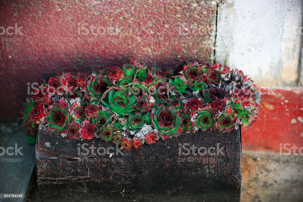 Red green flowers in stump stock photo