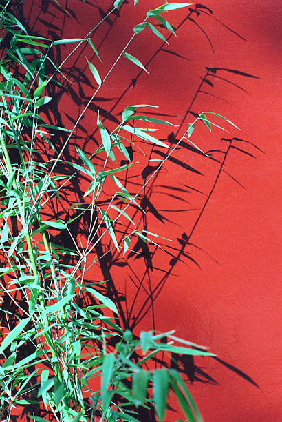 Red Green stock photo