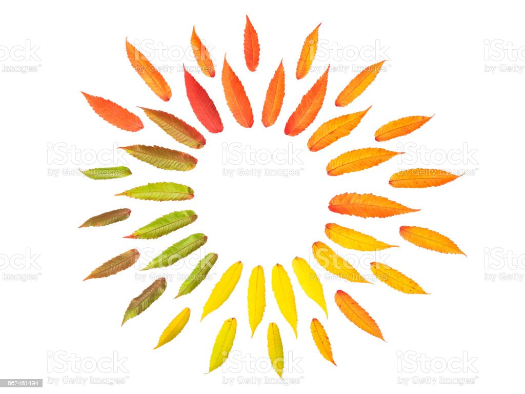 Red green yellow autumn tree leaves isolated white background stock photo