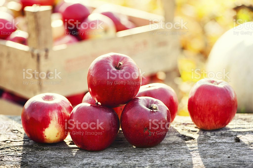 Red group of apples form autumn golden harvest stock photo