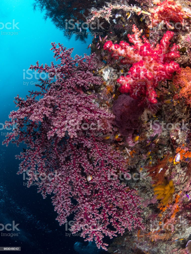 Red hard coral tree stock photo