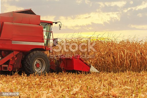 Red harvester working on corn field in autumn season
