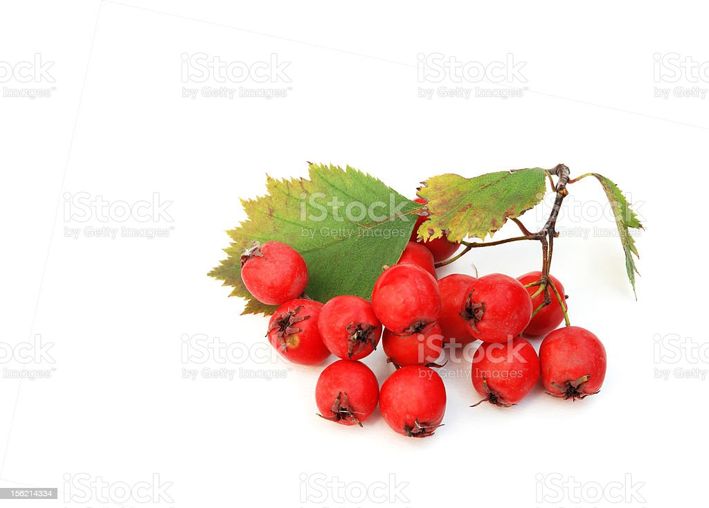 Red haw berry isolated on white royalty-free stock photo