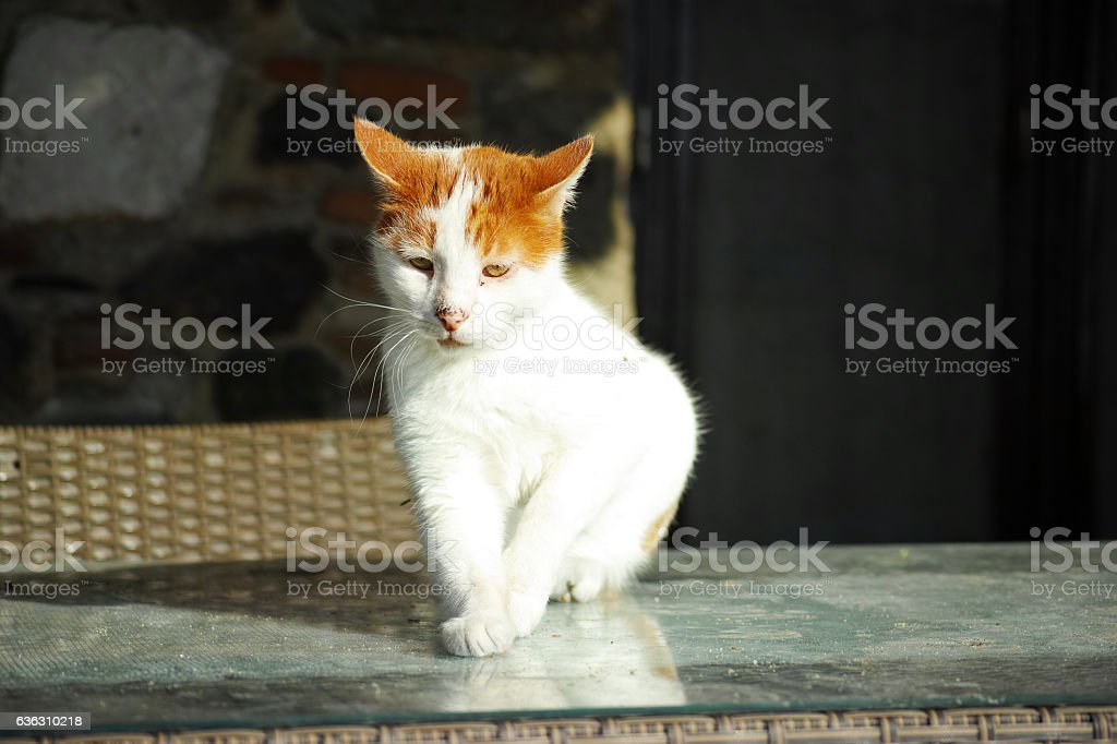 Red Head White Cat On The Table stock photo