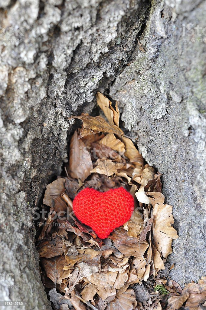Red heart in a tree royalty-free stock photo