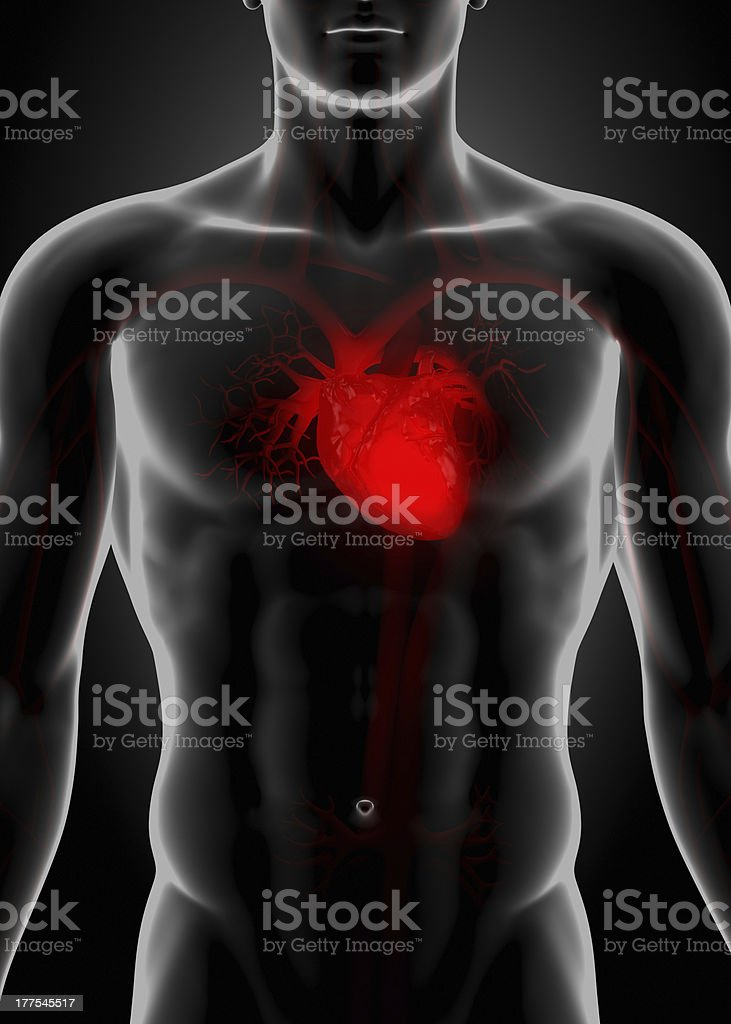 Red heart in chest royalty-free stock photo