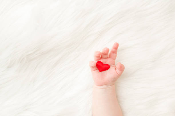 Red heart in infant palm. Hand on white, soft, fluffy fur blanket background. Baby giving love to parents. Closeup. Empty place for emotional, sentimental text, lovely quote or saying. Top down view. stock photo