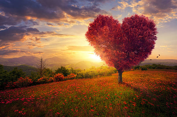 red heart shaped tree - liebesbaum stock-fotos und bilder