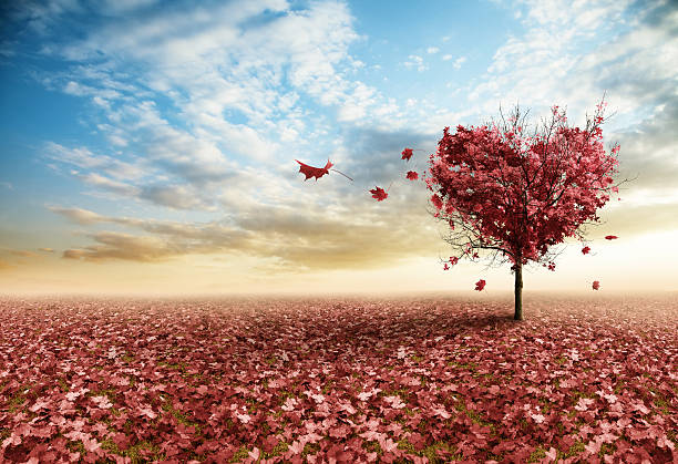 red heart tree - love stock photos and pictures