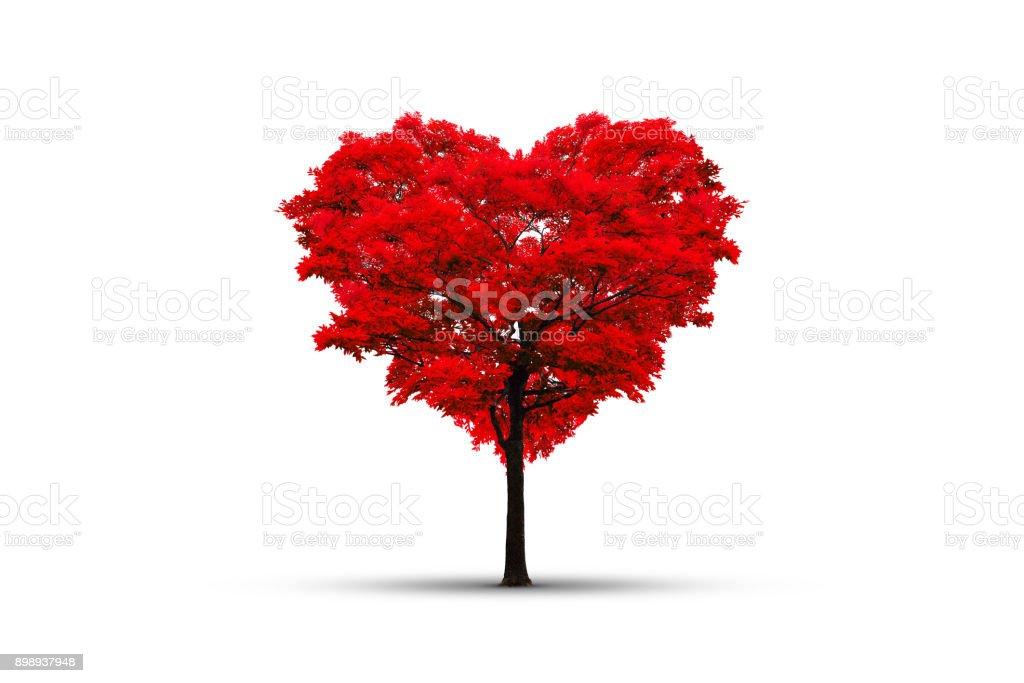 Árvore vermelha em forma de coração isolado no branco - foto de acervo