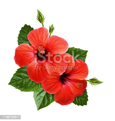 Red hibiscus flowers in corner tropical arrangement isolated on white