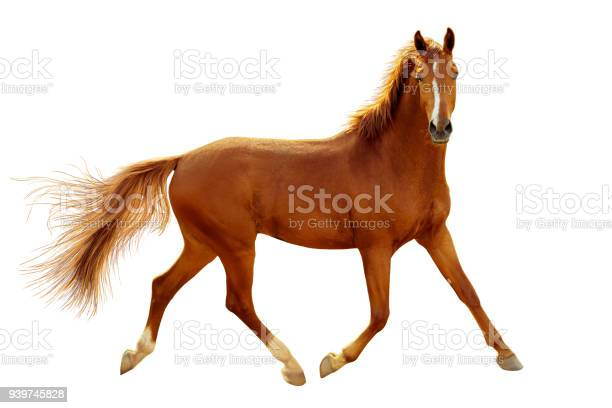 Red horse in contour light is trotting freely picture id939745828?b=1&k=6&m=939745828&s=612x612&h=knnu4yhdnt z65ompiaw008cguyetve3ajtacde2164=