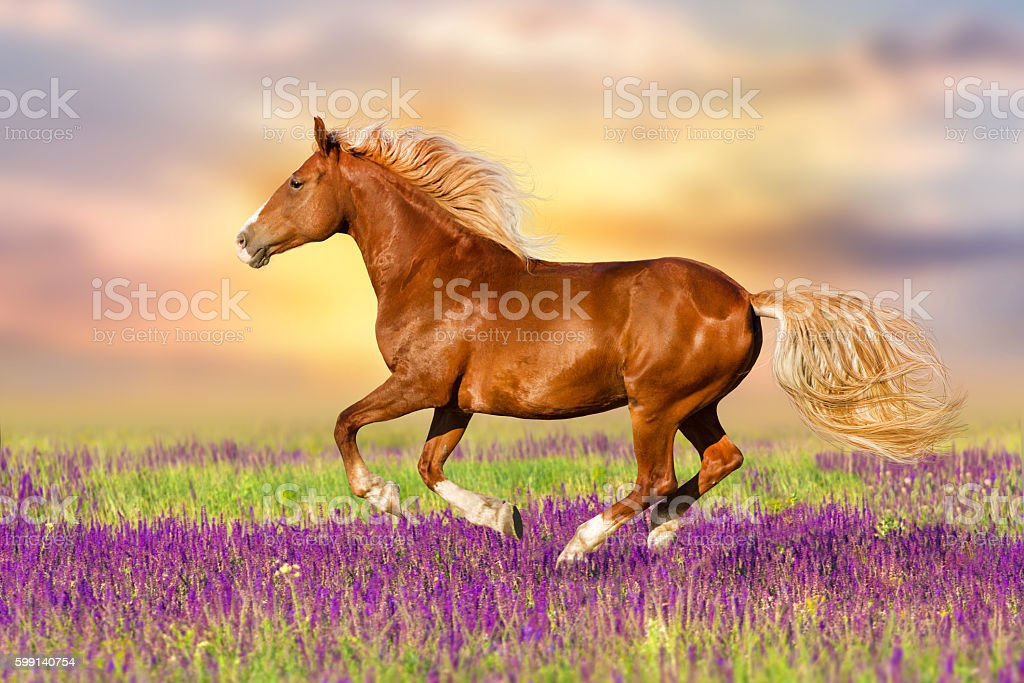 Red horse in flowers stock photo