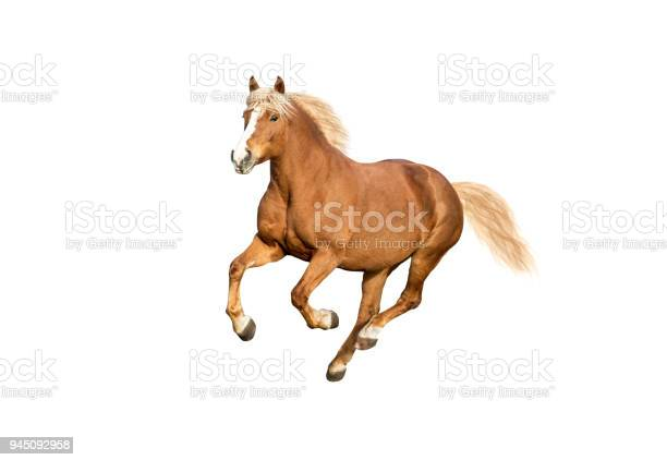 Red horse isolated on white background picture id945092958?b=1&k=6&m=945092958&s=612x612&h=dpng3ewt1og5q bl9nc1ifeuxi3abrferhemxn8lnn4=