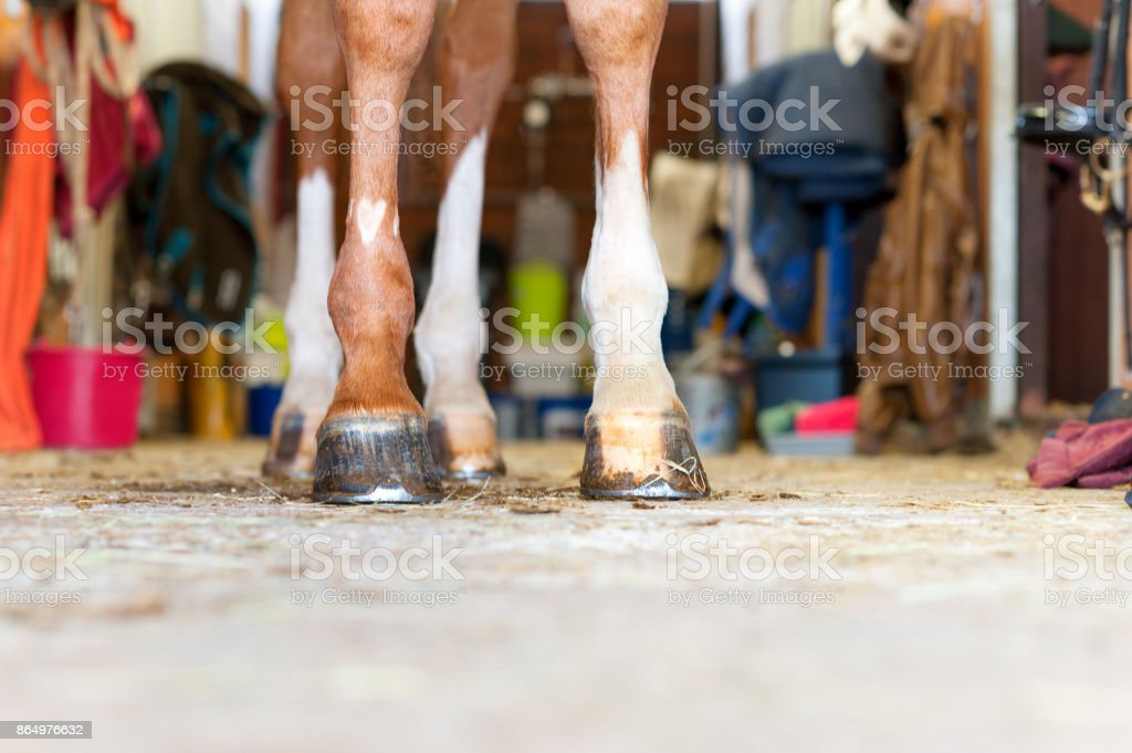 Red horse legs with heart shaped symbol standing in stable stock photo