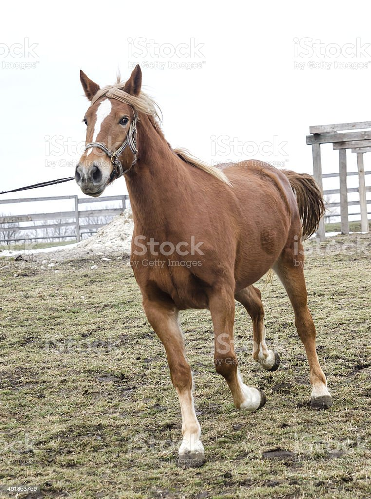 red horse on grass stock photo