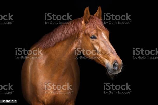 Red horse portrait picture id908981512?b=1&k=6&m=908981512&s=612x612&h=vcxh95ulug87kl7ircrip6ovyfwqrp8l84rrv3w qge=