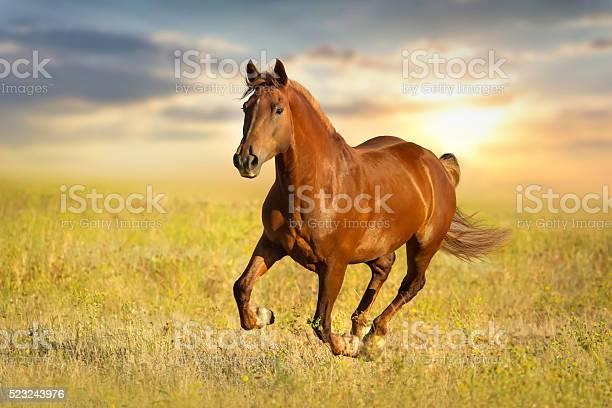 Red horse run picture id523243976?b=1&k=6&m=523243976&s=612x612&h=0dwvjcoluczzch6nwepjlnc0acbrytazlv9u cldluo=