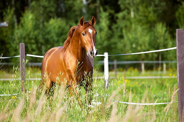 Red horse runs trot on the nature background picture id518182194?b=1&k=6&m=518182194&s=612x612&w=0&h=iafco37c24q3bm1xchdotyvsbvwkd186zc3xqjscbga=