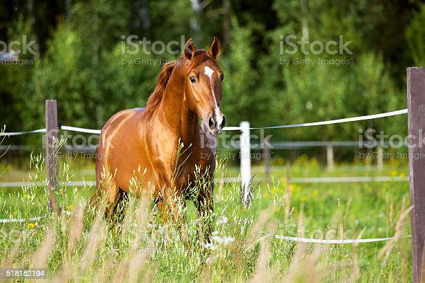 Photo of Red horse runs trot on the nature background